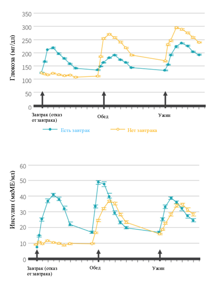 График изменения уровня глюкозы и инсулина в зависимости от времени суток и наличия завтрака